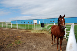 Outdoor corral for Horses