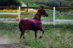 Equestrian Ranch in Colorado