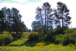 Colorado Home On Acreage