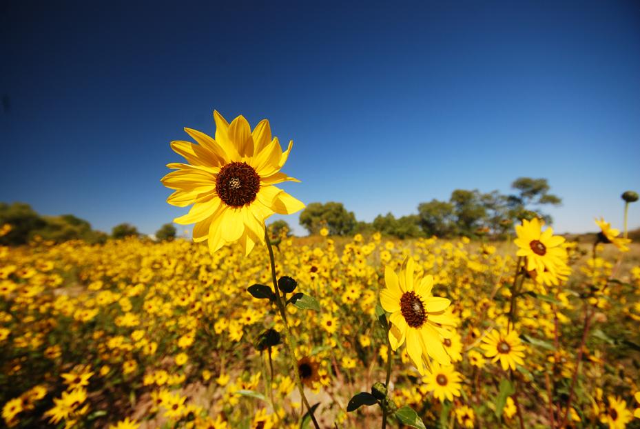 Natural Beauty on Colorado Land