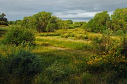Land in Elizabeth for Sale