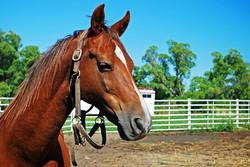 Equestrian Center in Colorado