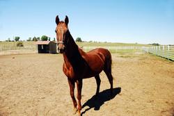 Elizabeth, Colorado Ranch