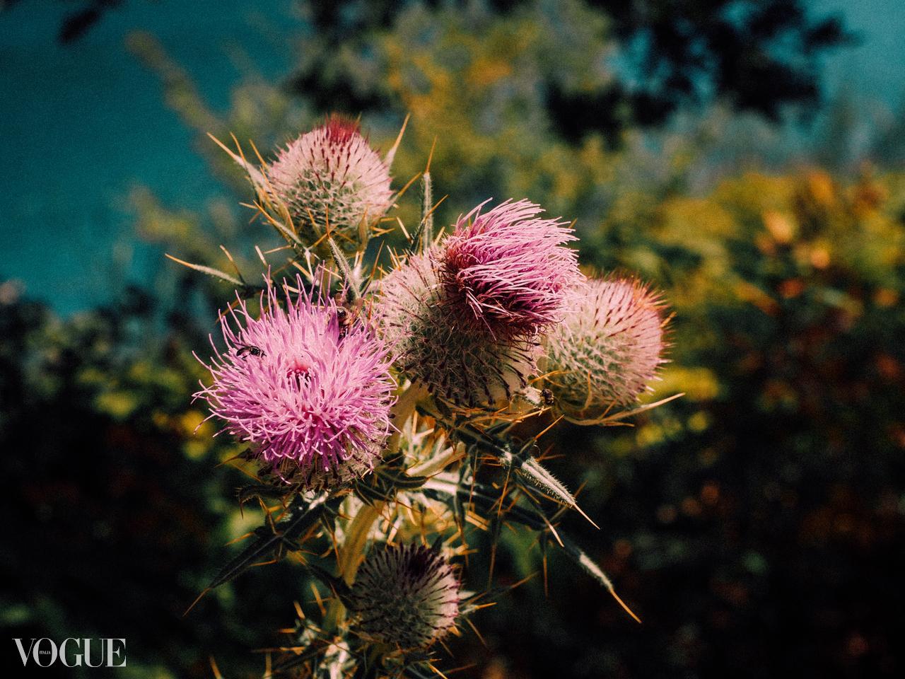 vogue wild flowers