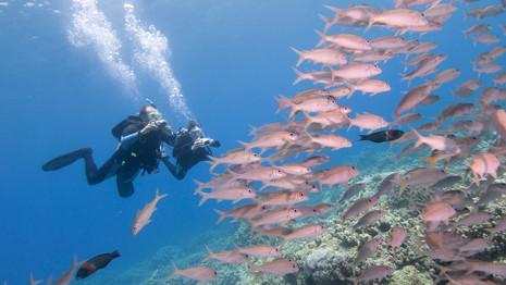 PADI Image a School of Fish