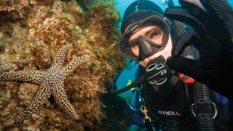 PADI Image of a Star Fish