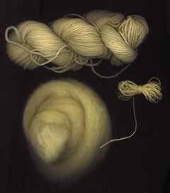 Yarn & Fiber Dyed with Queen Anne's Lace