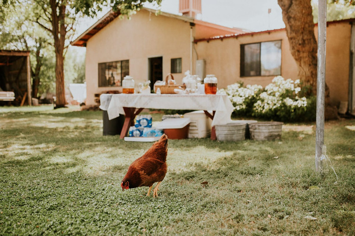 Red-Horse-Bed-and-Breakfast-outdoor-wedd
