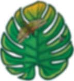 04b_leaf_edited.png