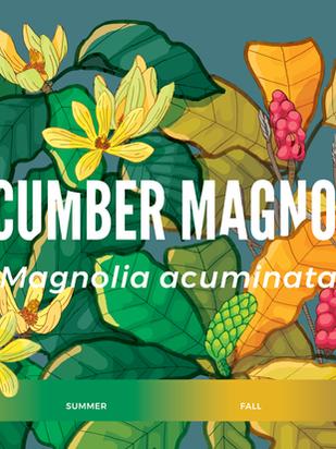 Cucumber-magnolia-Emergent-Tower-Railing