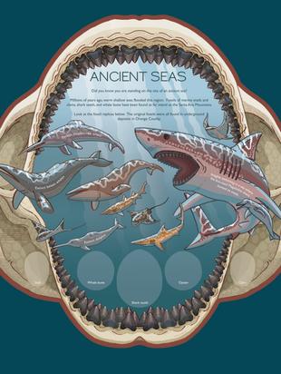 Ancient-Seas_colour_web2.png