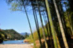 bambus3.PNG