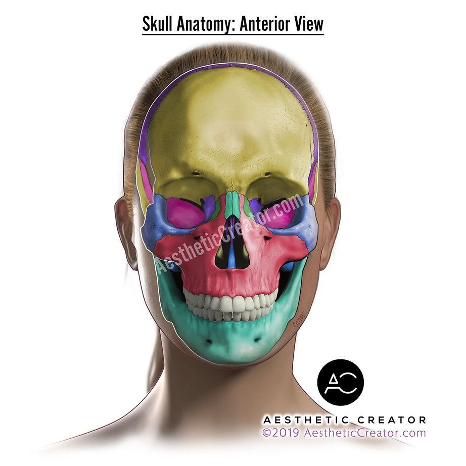 skull_colors_WEB_nolabels.jpg