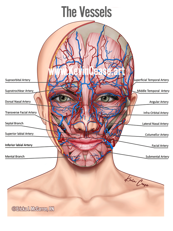 Vessels of the face botox