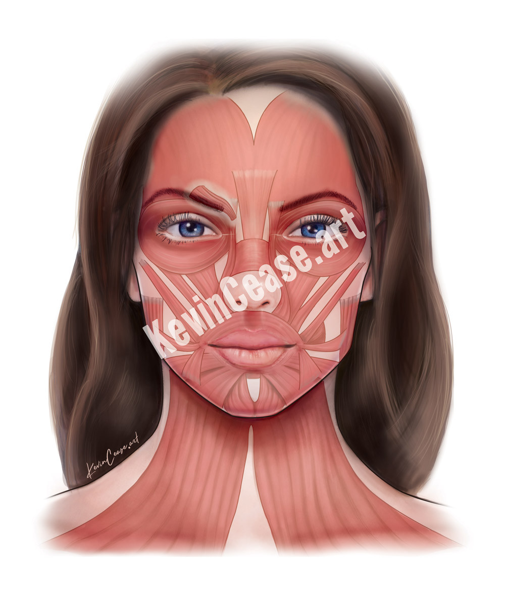 Botox girl illustration (muscles only)