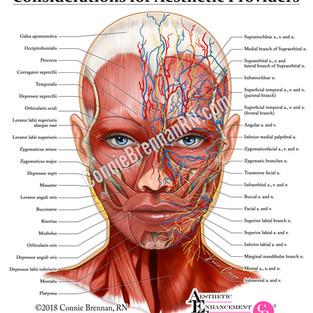 AES - Facial Anatomy
