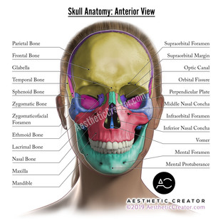 Skull Anatomy Anterior
