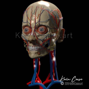 skull_anatomy_vessels