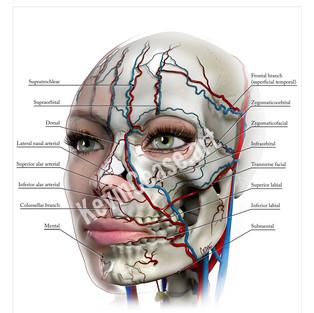 poster_arteries_web2.jpg