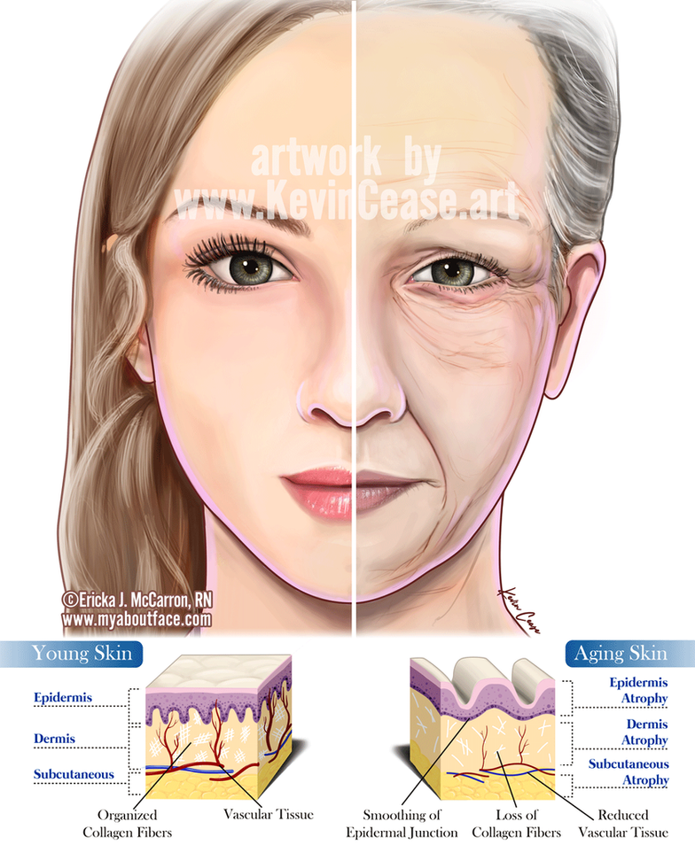Aging skin young/old