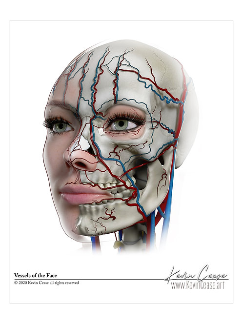 Vessels of the Face NO LABELS