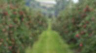 Orchard1.jpg
