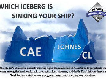 Which Iceberg is Sinking your Ship?