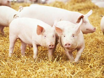 Are you ready for African Swine Fever (ASF)?