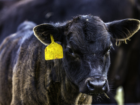 10 resolutions for cattle producers in 2019