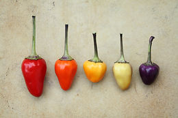 Chinese 5 Colour Pepper