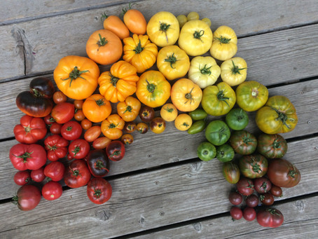 How-To Choose The Right Tomato Varieties For Your Garden