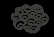 ענן_3.png
