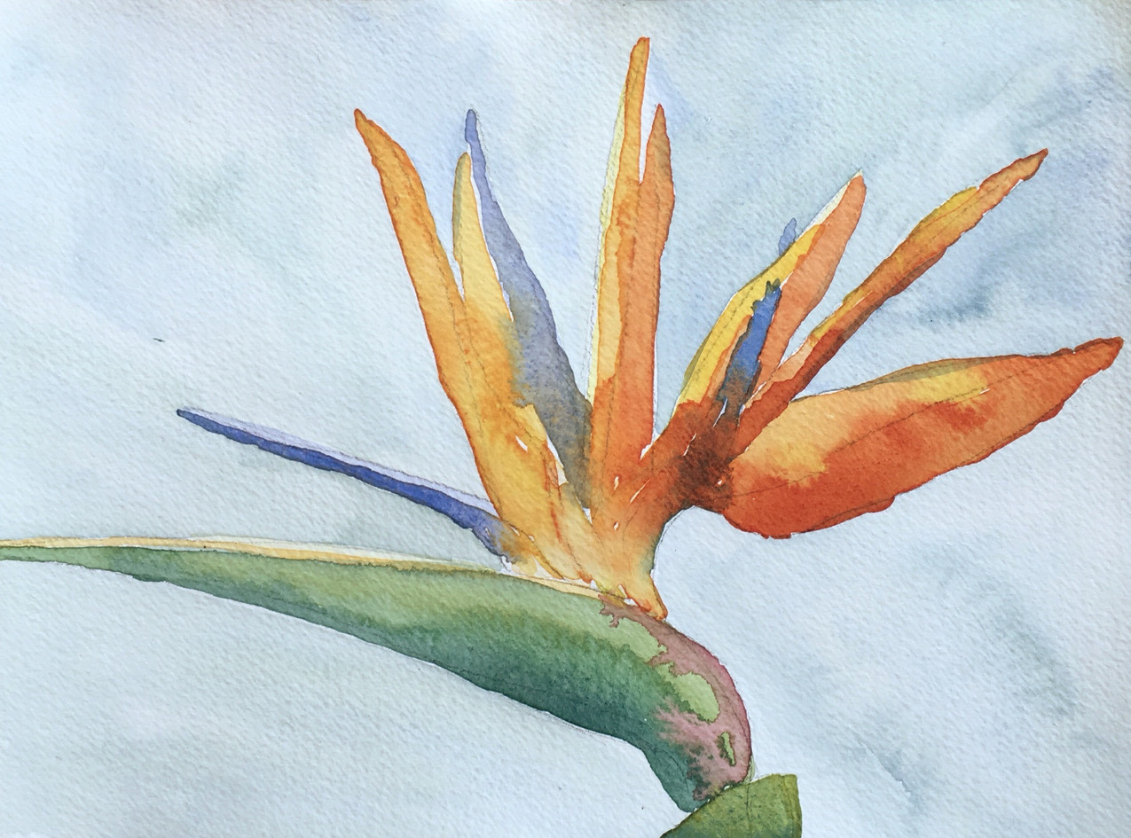 Watercolor painting of a bird of paradise flower.