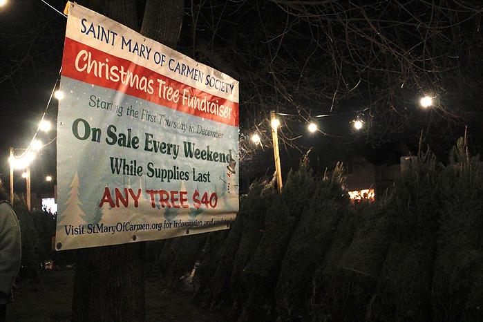 Christmas Trees Newton