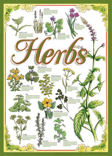 Herb Chart Design