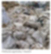 Película_agrícola_-_mulch.png