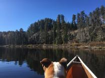 Bulldog in Canoe
