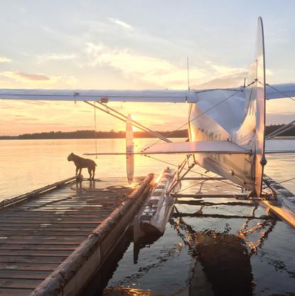 Bulldog and Floatplane