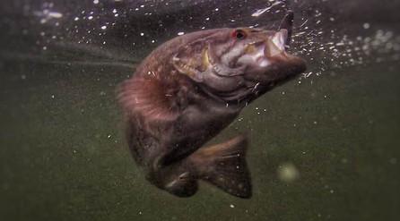Moose Lake Fish