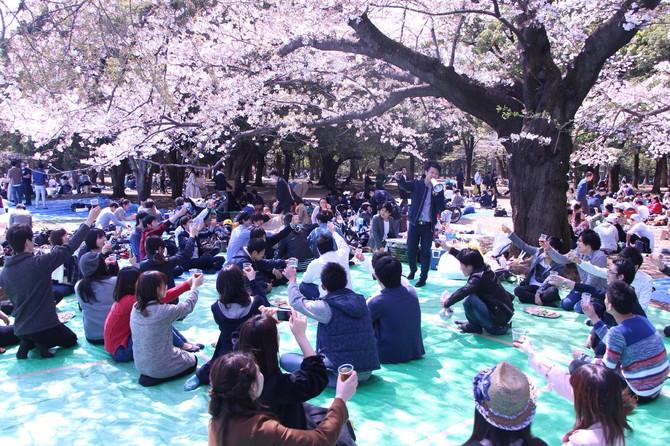 3/31(土)花見@代々木公園🌸