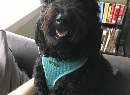 Pets of CCS: Part 2
