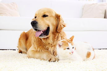 safe for pets eco maid cleaning services, Franklin, TN