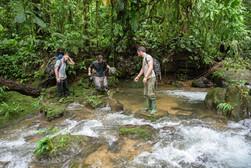 Chocó Rainforest, Ecuador