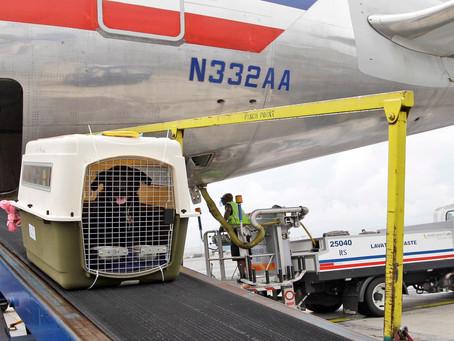 (AVIH) Prijevoz pasa zrakoplovom