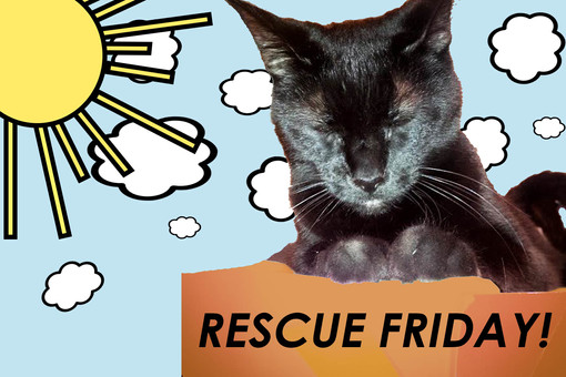 MEOW. RESCUE FRIDAYS! FROM MR.THOM + SAMMI