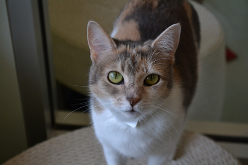 PAWS RESCUE PET OF THE WEEK! LILITH