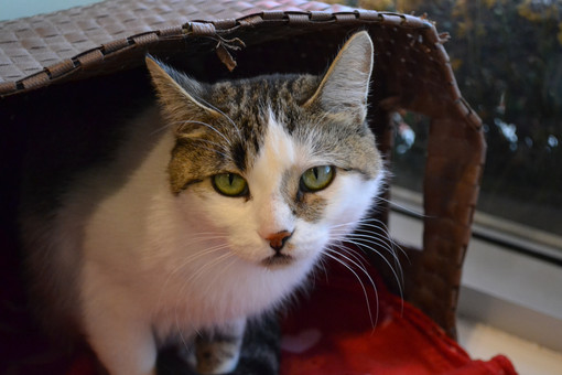 RESCUE PET OF THE WEEK: CAMILA
