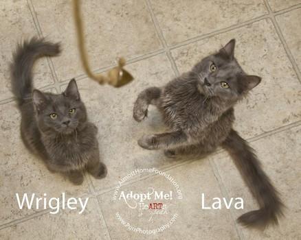 AHF-Wrigley-and-Lava.jpg