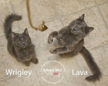 RESCUE FRIDAY: WRIGLEY + LAVA