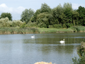 Nordenhamer Gewässer - Wasserqualität und Fischsterben